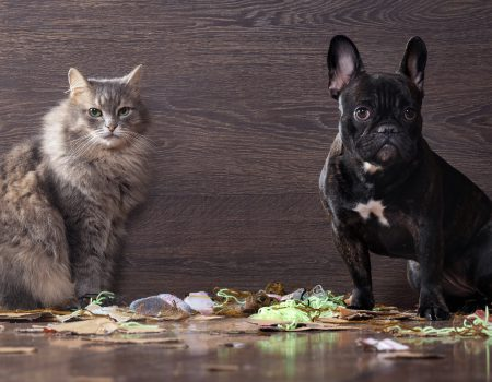 Blame the dog and the cat among the pieces of paper and trash in anticipation of punishment