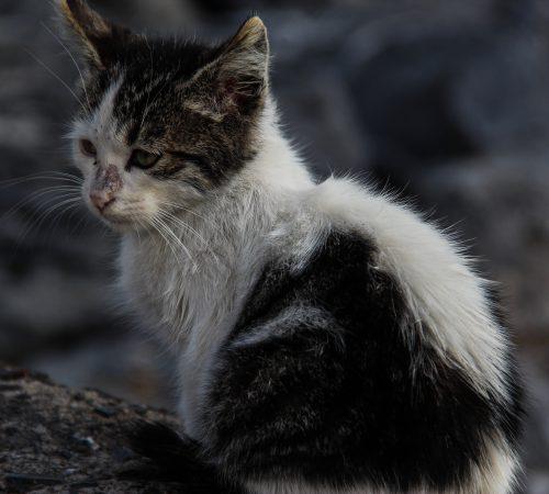 cat-376388