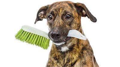 hondendienst-ochtend